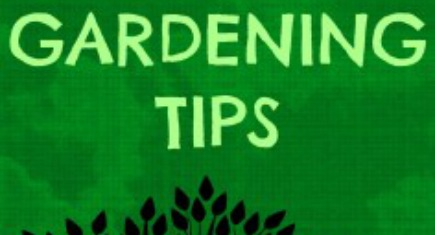 gardening435.jpg