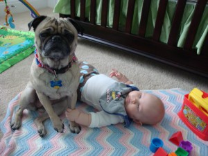 babies-and-dogs