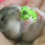 hamster-eating-broccoli