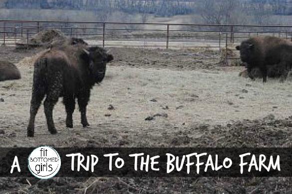 buffalo-stance-585