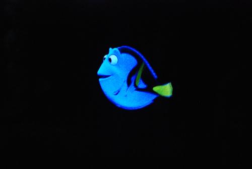 dory the fish