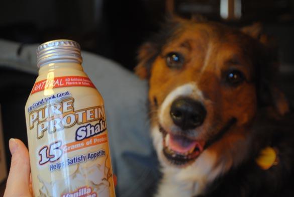 pure-protein-shake
