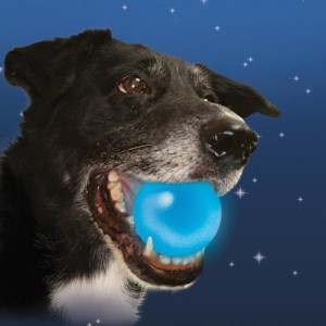 Play fetch, like Lionel Richie says: All night long!
