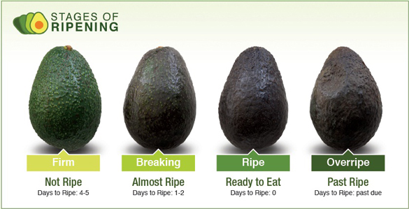 Avocado 101 How To Pick An Avocado Ripen It Store It