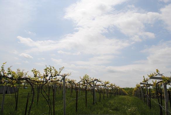 jowler-creek-winery