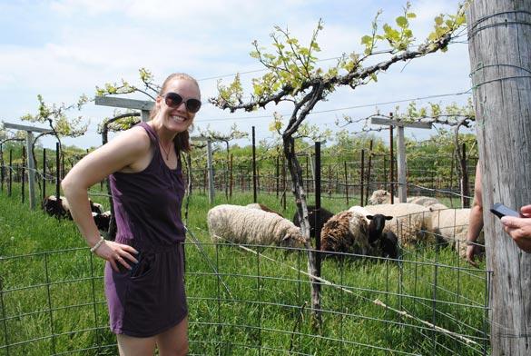 me-sheep