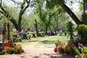 Pecan Groves at Farm