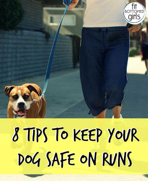 dog-runs-585