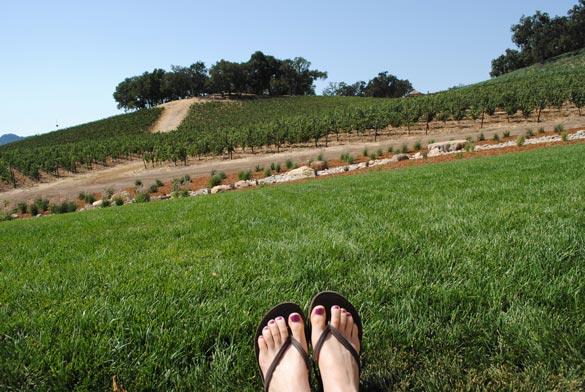 justin-vineyard