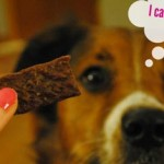 dog-healthy-treat-435