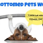 fit-bottomed-pets-week-435