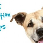 pet-nutrition-tips-435