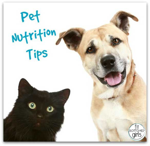pet-nutrition-tips