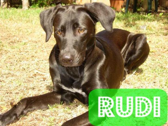 Rudi dog
