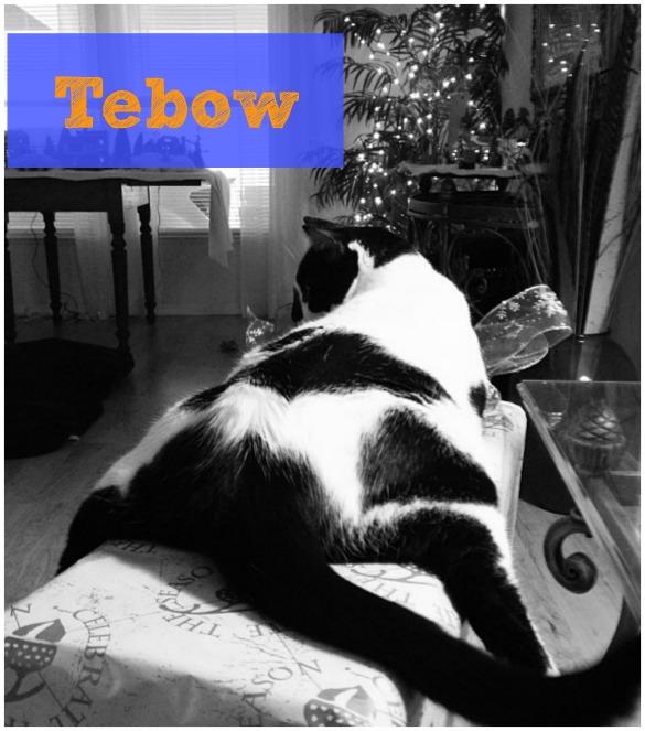 tebow cat