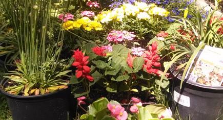 flowers435