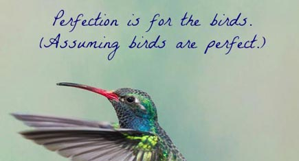 perfection-birds-435