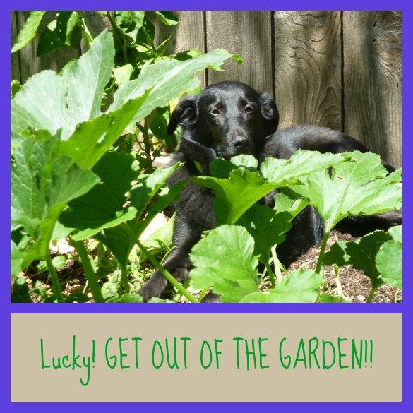 Lucky-garden-585