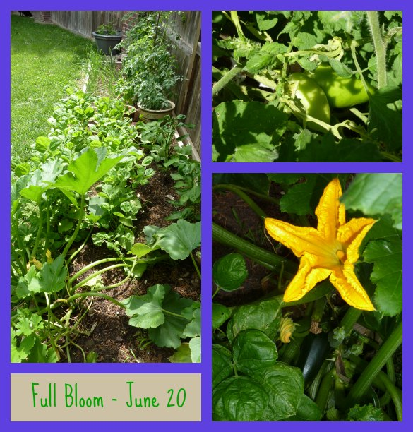 garden-collage-2-585