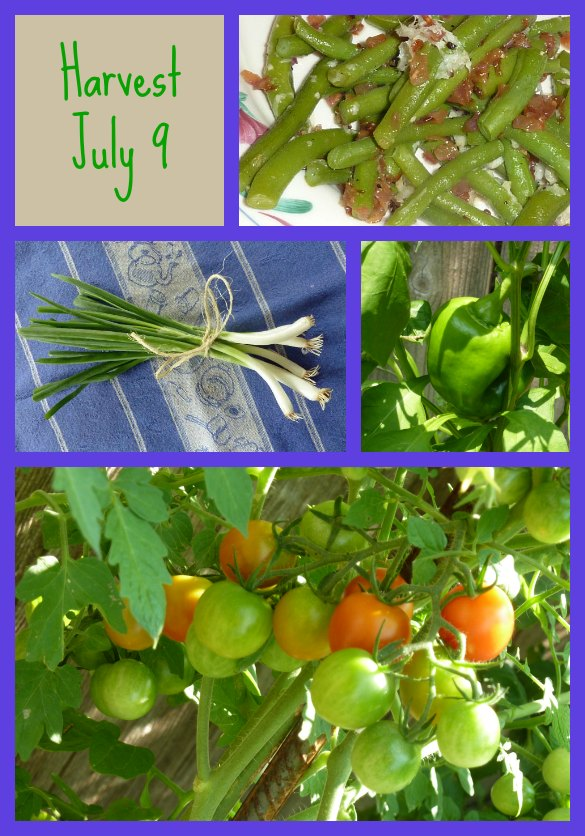garden-collage-3-585