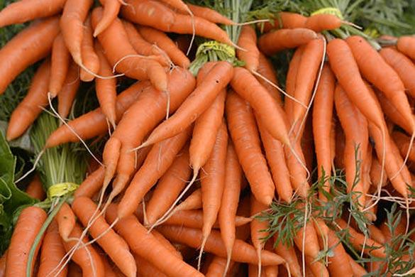 carrots-585