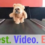 dog-teddy-bear-treadmill-435