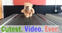 Dog in Teddy Bear Suit Works Out … and Is the Cutest Thing Ever