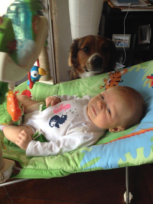 baby-dog-3