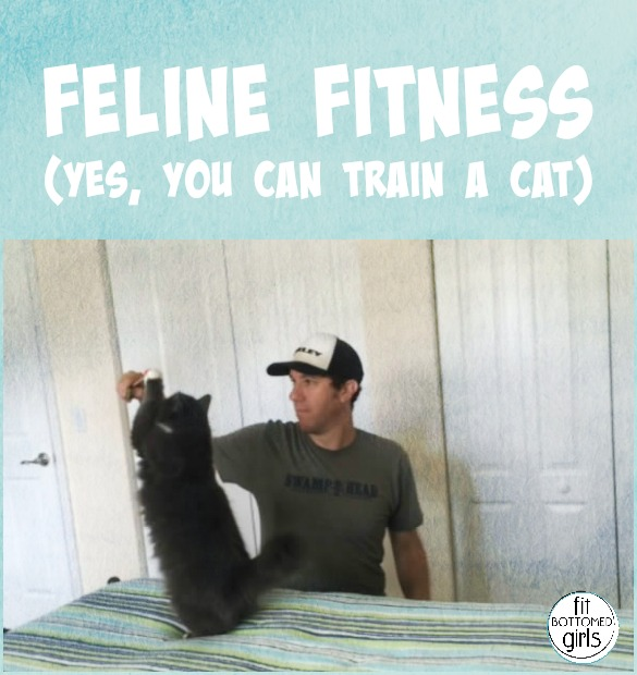 training with a cat