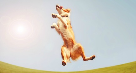a dog jumping for joy in the middle of a field and a bright blue sky toned with a retro vintage instagram filter app or action effect