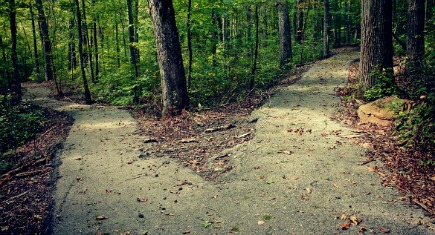Two paved paths diverge in the woods.