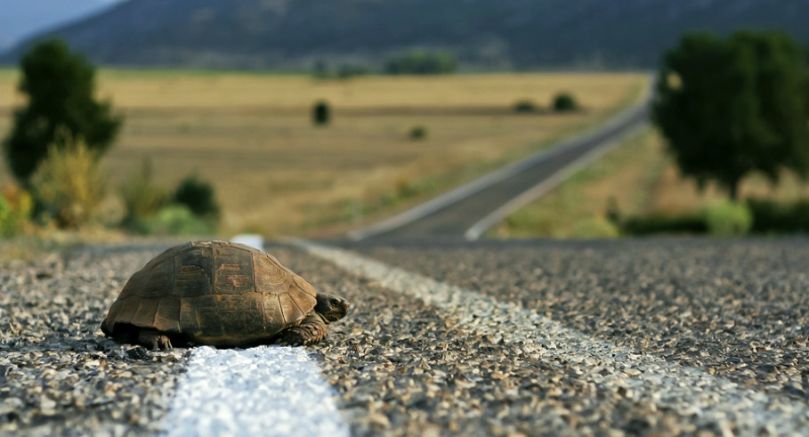 Turtle on the asphalt road in Turkey