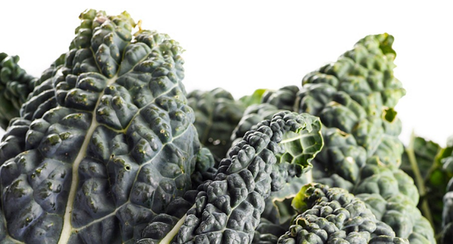 Black Kale Italian Kale Black Cabbage Cavolo nero isolated on white